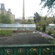 The famous Saltaire allotments, provided for the workers to grow their own veg, and still made good use of today