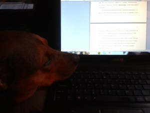 My dog - just one of many distractions