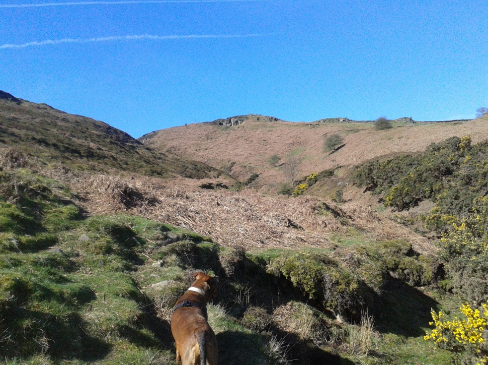 "On the moors with my dog, ""mulling"""
